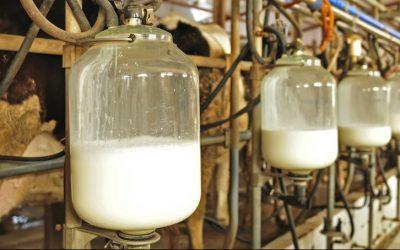 raw milk e1592497270148